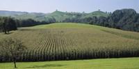 Switzerland, Canton Zug, Panoramic view of Cornfields Fine Art Print