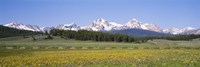 Flowers in a field with a mountain in the background, Sawtooth Mountains, Sawtooth National Recreation Area, Stanley, Idaho, USA Fine Art Print