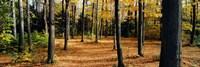 Chestnut Ridge Park Orchard Park NY USA Fine Art Print