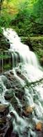 Ganoga Falls Ricketts Glenn State Park PA Fine Art Print