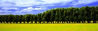 Row Of Trees, Uppland, Sweden Fine Art Print