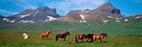 Horses in Borgarfjordur, Iceland Fine Art Print