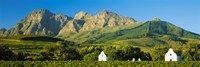 Vineyard in front of mountains, Babylons Torren Wine Estates, Paarl, Western Cape, Cape Town, South Africa Fine Art Print