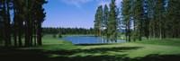 Trees on a golf course, Edgewood Tahoe Golf Course, Stateline, Nevada, USA Fine Art Print