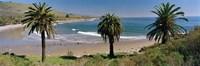 High angle view of palm trees on the beach, Refugio State Beach, Santa Barbara, California, USA Fine Art Print