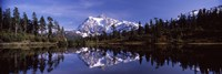 Mt Shuksan Reflection at Picture Lake, North Cascades National Park Fine Art Print