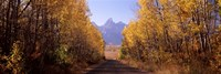 Road passing through a forest, Grand Teton National Park, Teton County, Wyoming, USA Fine Art Print