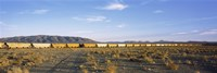 Freight train in a desert, Trona, San Bernardino County, California, USA Fine Art Print