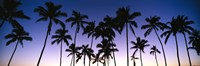 Silhouettes of palm trees at sunset Fine Art Print