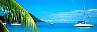 Sailboats in the ocean, Tahiti, Society Islands, French Polynesia (horizontal) Fine Art Print