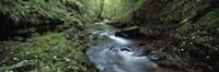 River flowing through a forest, River Lyd, Lydford Gorge, Dartmoor, Devon, England Fine Art Print
