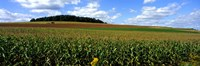 Field Of Corn With Tractor In Distance, Carroll County, Maryland, USA Fine Art Print
