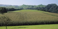 Switzerland, Canton Zug, Panoramic view of Cornfields Fine Art Print
