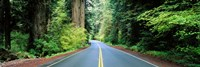 Road passing through a forest, Prairie Creek Redwoods State Park, California, USA Fine Art Print