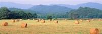 Hay bales in a field, Murphy, North Carolina, USA Fine Art Print