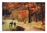 Autumn's Morning Light Fine Art Print