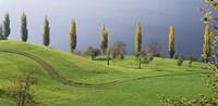 Switzerland, Lake Zug, View of a row of Poplar Trees Fine Art Print