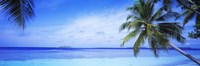Ocean, Island, Water, Palm Trees, Maldives Fine Art Print