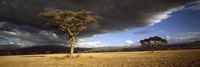 Tree w\storm clouds Tanzania Fine Art Print