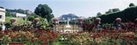 Flowers in a formal garden, Mirabell Gardens, Salzburg, Salzkammergut, Austria Fine Art Print