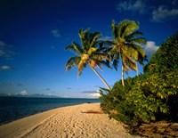 Palm trees and beach, Tahiti French Polynesia Fine Art Print
