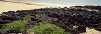 Lava rocks at a coast, Floreana Island, Galapagos Islands, Ecuador Fine Art Print