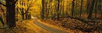Fall woods Monadnock NH USA Fine Art Print