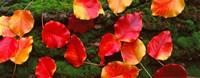 Fall Leaves Sacramento CA USA Fine Art Print
