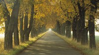 Road w/Autumn Trees Sweden Fine Art Print