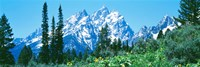 Snow covered peaks, Grand Teton National Park WY Fine Art Print