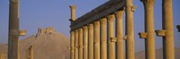 Low angle view of Great Colonnade, Palmyra, Syria Fine Art Print