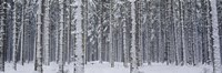 Snow covered trees in a forest, Austria Fine Art Print