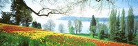 Lake Constance, Insel Mainau, Germany Fine Art Print