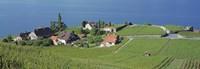 Aerial View Of Vineyards By A Lake, Lake Geneva, Vaud, Switzerland Fine Art Print