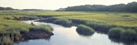 Salt Marsh Cape Cod MA USA Fine Art Print