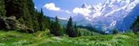 Alpine Scene Near Murren Switzerland Fine Art Print