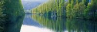 Poplar Trees On River Aare, Near Canton Aargau, Switzerland Fine Art Print