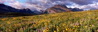 Flowers in a field, Glacier National Park, Montana, USA Fine Art Print