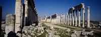 Old ruins on a landscape, Cardo Maximus, Apamea, Syria Fine Art Print
