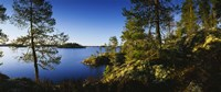 Trees at the lakeside, Lake Saimaa, Puumala, Finland Fine Art Print