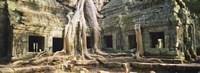 Close up of Old ruins of a building, Angkor Wat, Cambodia Fine Art Print