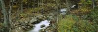 Stream through the Forest, New Hampshire Fine Art Print
