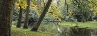 Trees near a pond in a park, Vondelpark, Amsterdam, Netherlands Fine Art Print