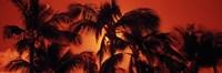 Palm trees at dusk, Kalapaki Beach, Hawaii Fine Art Print