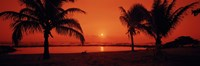 Silhouette of palm trees on the beach at dusk, Lydgate Park, Kauai, Hawaii, USA Fine Art Print