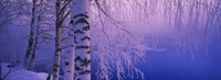 Birch tree at a riverside, Vuoksi River, Imatra, Finland Fine Art Print