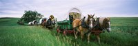 Historical reenactment, Covered wagons in a field, North Dakota, USA Fine Art Print