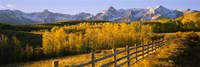 Trees in a field near a wooden fence, Dallas Divide, San Juan Mountains, Colorado Fine Art Print