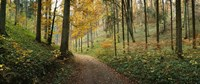 Road passing through a forest, Baden-Wurttemberg, Germany Fine Art Print