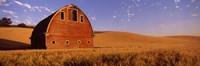 Old barn in a wheat field, Palouse, Whitman County, Washington State Fine Art Print